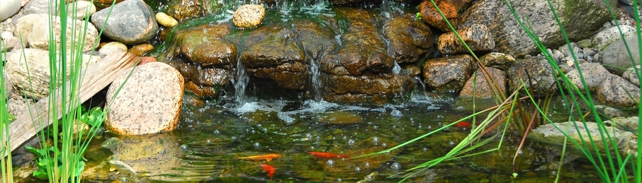 stone pond with fish-906x259.JPG