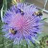 Pollen Pals: $20-$39