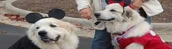 mick-and-min-dogs-349x100.JPG