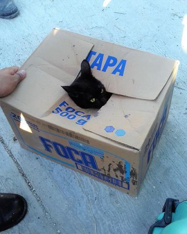 Cat-in-Box-600x480.jpg
